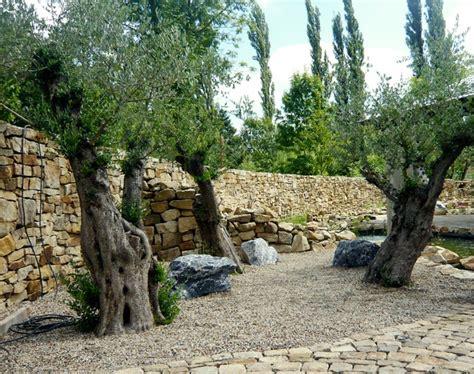 olivenbaeume tipps beispiele zur verwendung im garten