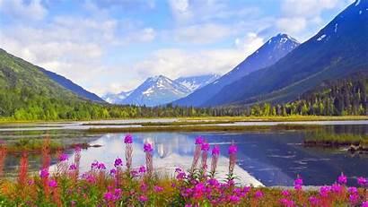 Alaska Spring Wallpapers Kenai Mountains Background Flowers