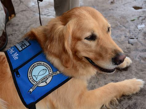 k 9 comfort dogs why dogs are comforting after tragedy business insider