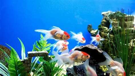 Animated Desktop Wallpapers 1920x1080 - animated aquarium desktop wallpaper 53 images