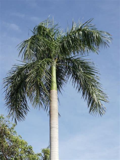 darwin palm tree photo
