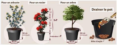 comment planter un arbuste en pot planter un arbuste ou un arbre en pot verger