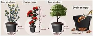 Arbuste Fleuri En Pot : planter un arbuste ou un arbre en pot verger ~ Premium-room.com Idées de Décoration