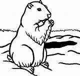 Coloring Groundhog Pages Printable Sheet Template Preschool Adults Adult Getcoloringpages Animal sketch template