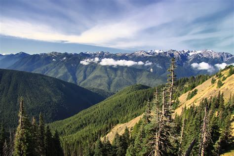 Loving Washington State Hurricane Ridge In Olympic