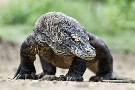 dangerous animals  asia