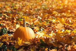 How, Pumpkin, Can, Be, Beneficial, To, Your, Teeth