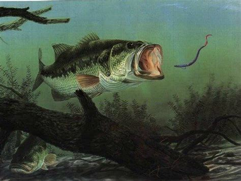 largemouth bass eating plastic worm bass fishing