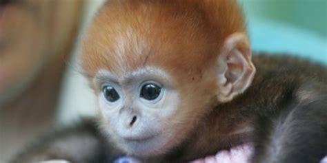 bichinos de la semana bebes monos muuuuuuuuuuy monos fotos