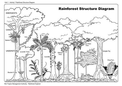 5th grade rainforest worksheets worksheets for all