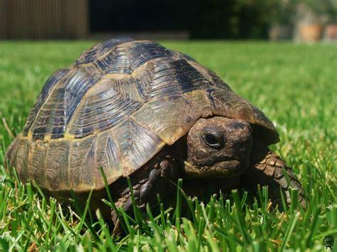 Schildkröte *Nora* - Design Nation