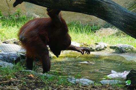 foto galerie  zoo duisburg freizeitpark weltde