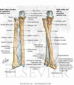 Illustrations In Orthopaedic Clinical Examination