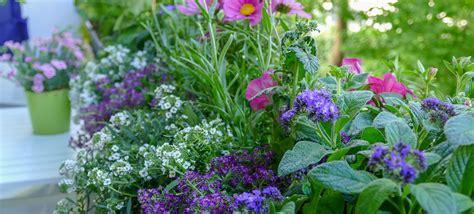 5 Bienenfreundliche Pflanzen Für Den Balkon › Velanga