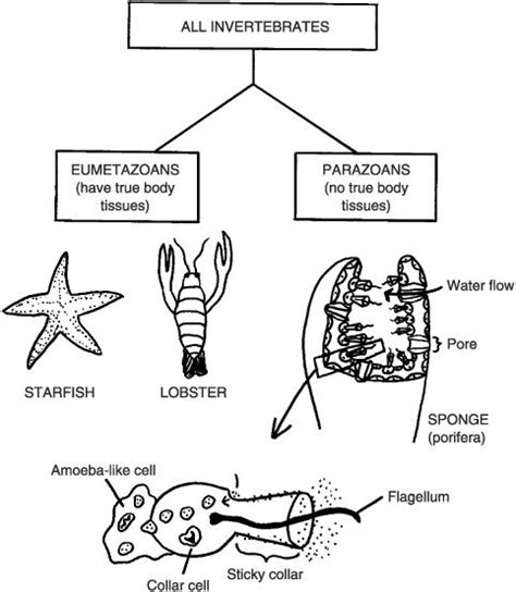Invertebrates As Special Animals: