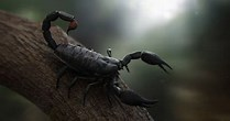 Image result for Scorpion Wallpaper HD
