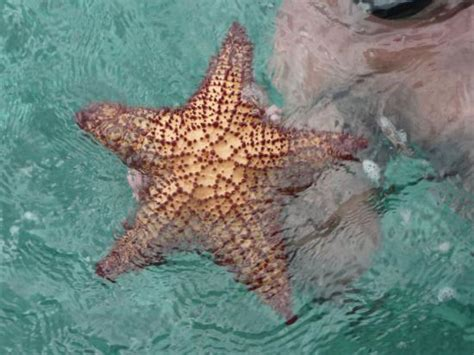 etoile de mer deco l etoile de mer picture of ryanna sun la romana tripadvisor