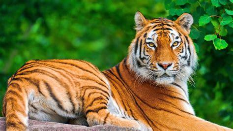 Hot Girl Wallpaper Best Tiger Free
