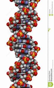 Dna Structure  B