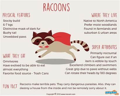 Facts Raccoons Animals North America Animal Mammals