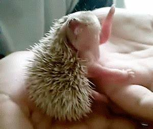Baby Animal Tongue GIFs - Find & Share on GIPHY