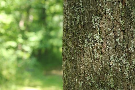 tree forest background 183 free photo on pixabay