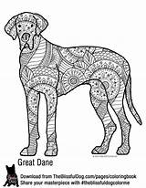 Coloring Dane Bold Dog Adult Danes Colouring Dogs Printables sketch template