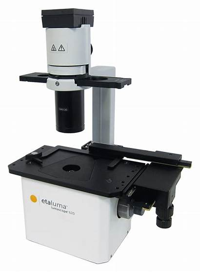 Microscope Cell Imaging Fluorescence Resolution Olympus Phase
