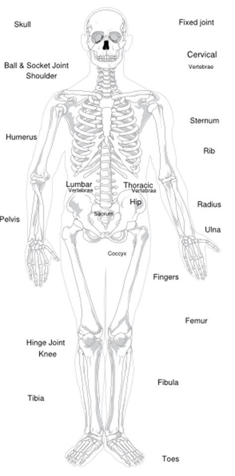 labeled skeleton clip art  clkercom vector clip art