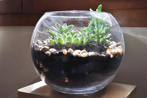 diy faire terrarium de plantes plantes grasses terrarium plantes grasses et faire soi