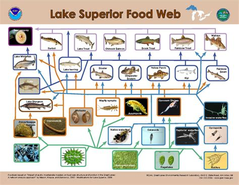 cuisine web file lake superior food web pdf