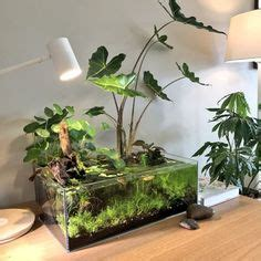 gorgeous aquarium aquascaping nano aquariums indoor