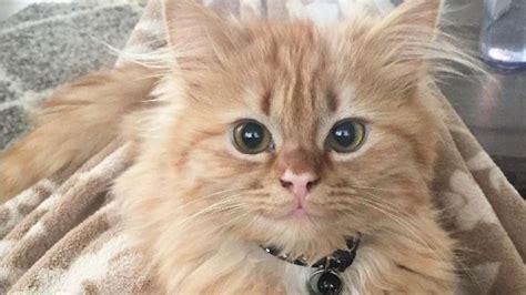 Charme Wie Bezaubert by Nach Rettung Aus Tierheim Katze Bezaubert Durch Ihr