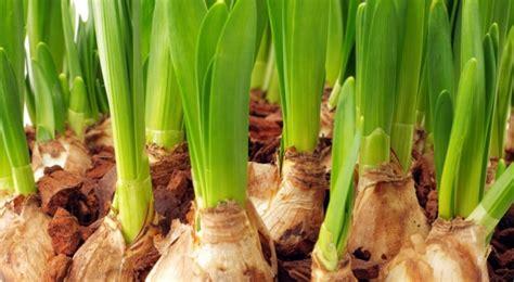 plant bulbs landscaping blog richard sperber landscaping