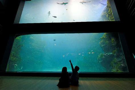 horaire aquarium de aquarium de la mulatiere 28 images les zoos dans le monde aquarium de lyon les zoos dans le