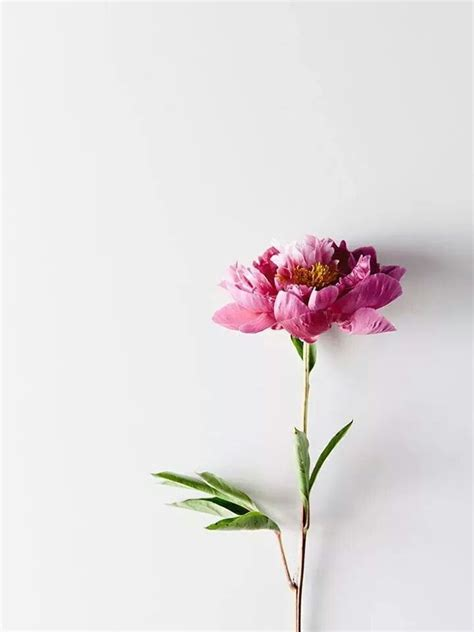 Pinterest † Christianaes Flowers Flowers Beautiful