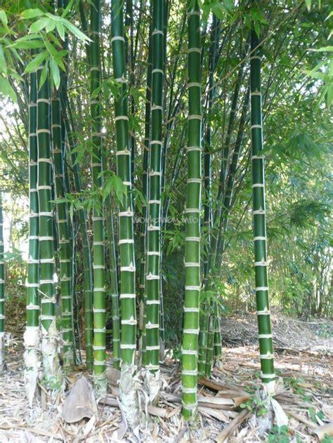 garden bamboo work in a tropical bamboo garden queensland