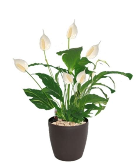 plantes pour bureau les plantes dédiées pour la décoration d un bureau