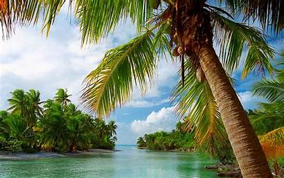 Tropical Nature Palm Beach Landscape Trees French