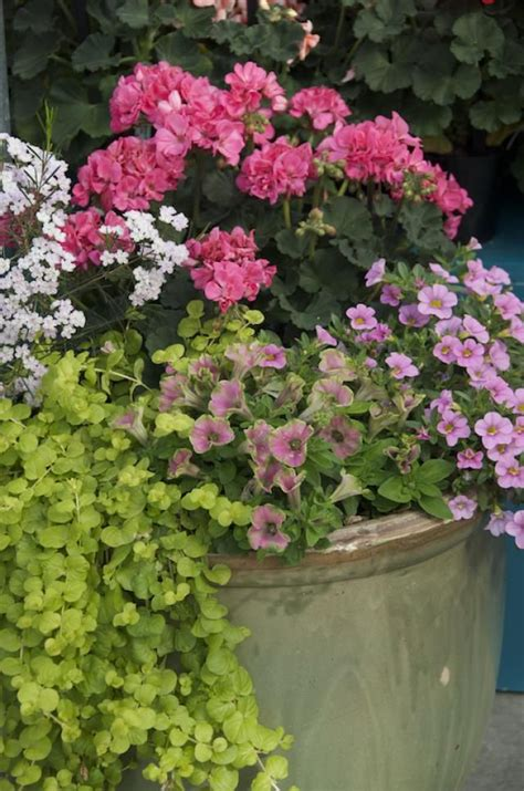 images  container gardens  pinterest