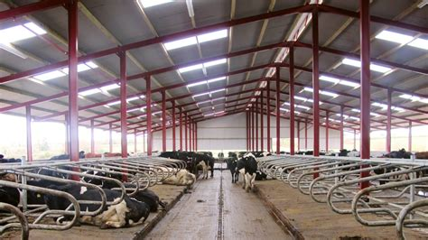 Dairy Cow Shed Design - new cow cubicle shed in tipperary