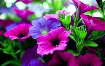 Flower Nature Wallpapers Desktop