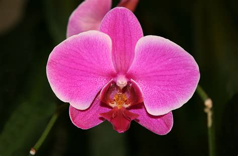 orchids care google images