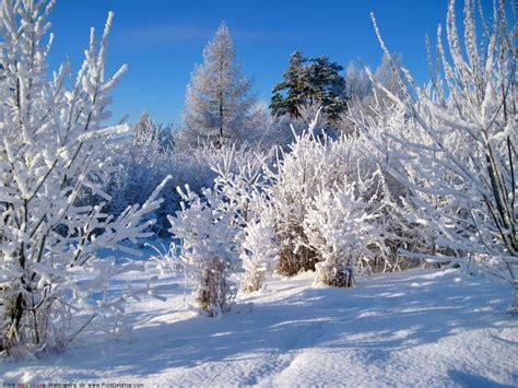 Winter Nature Free Desktop Wallpaper  Desktop Wallpaper