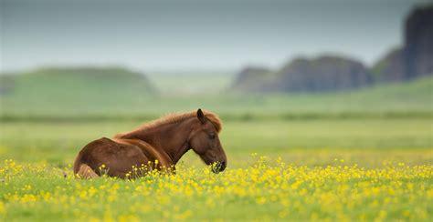 Summer Animal Wallpaper - horses summer wallpaper backgrounds horses wallpapers