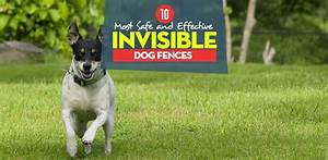 top 10 best invisible dog fence for dogs safe containment With best underground electric dog fence