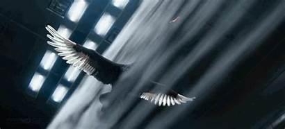 Swan Wind Tunnel Fly Cgi Realistic Incredibly