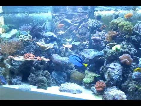 aquarium recifal 224 montpellier 1500l