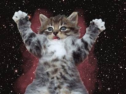 Kitten Friday Happy Gifs Crazy Funny Fun