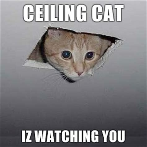 Ceiling Cat Meme - couple questions about my newly acquired 1988 944 base rennlist porsche discussion forums
